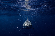 Mug shot - Ocean Portrait