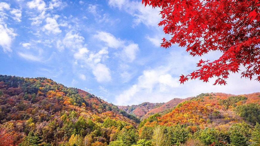 나무02.jpg