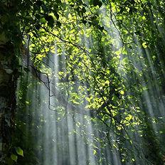 treessunlight.jpg
