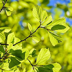 treessunlight3.jpg