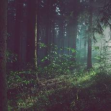 treessunlight2.jpg