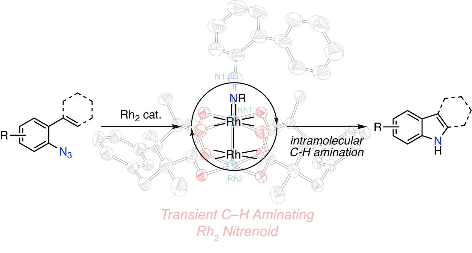 In Crystallo Snapshots of Rh2-Catalyzed C–H Amination
