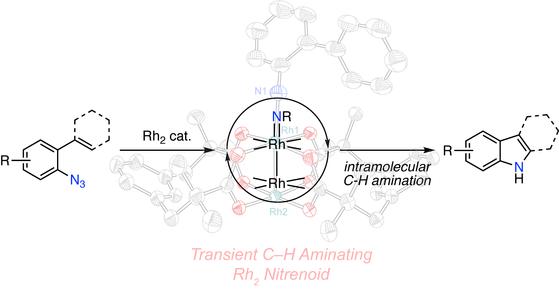 In Crystallo Snapshots of Rh2-Catalyzed C–H Amination