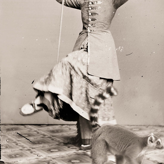 Dance of the Lemur