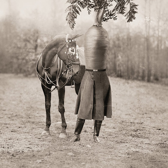Equine Dream