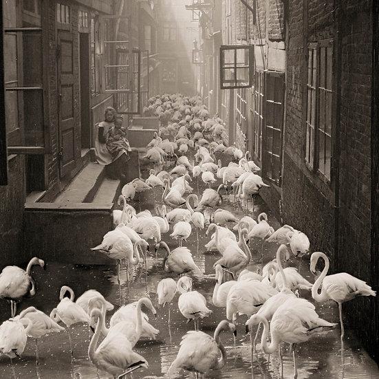 Flamingo Alley