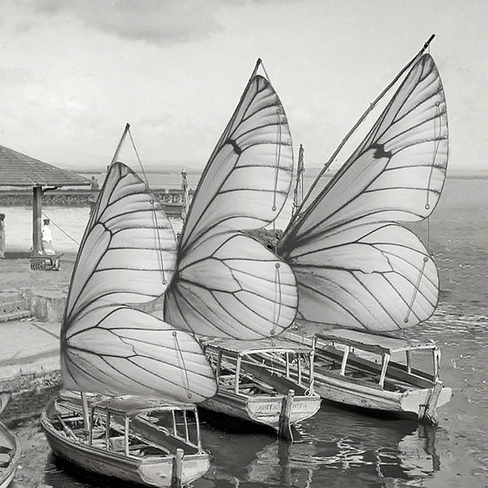 Butterfly Harbor