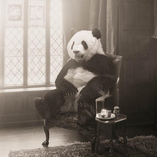Panda Parlor