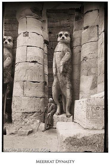 Meerkat Dynasty