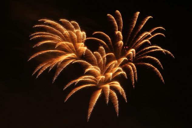Firework Palm.jpg