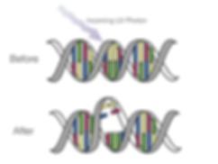 UV light damanging the DNA of a pathogen