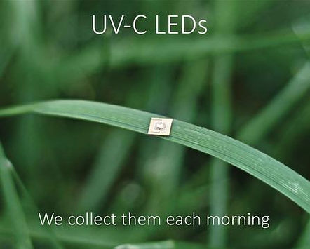 "Mana meme- LED resting on blade of grass "" UV-C LEDs; we collect them each morning"