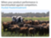 big cow meme - uv leds, water purification