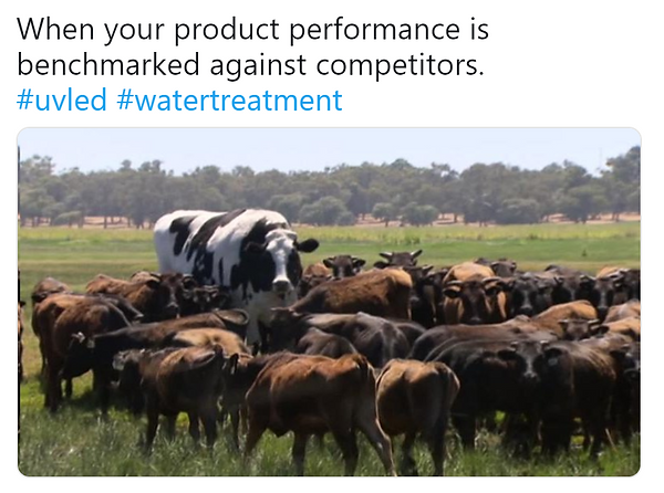 big cow meme - uv leds, water purification