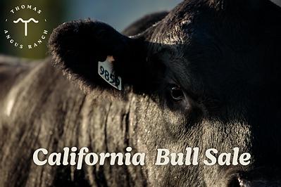 Cali Bull Sale 2021.png