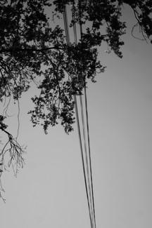 Entre les câbles (noir et blanc).