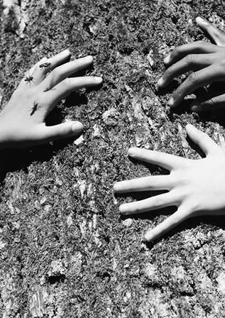 Mains et mouches.
