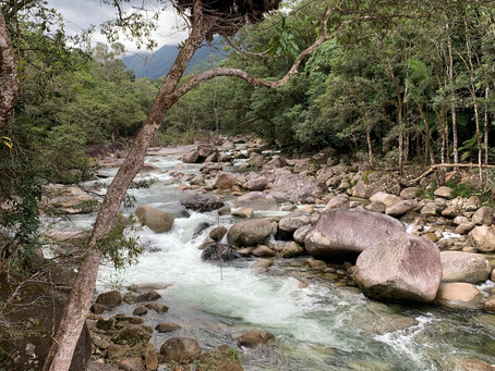Visit the breathtaking Mossman Gorge!