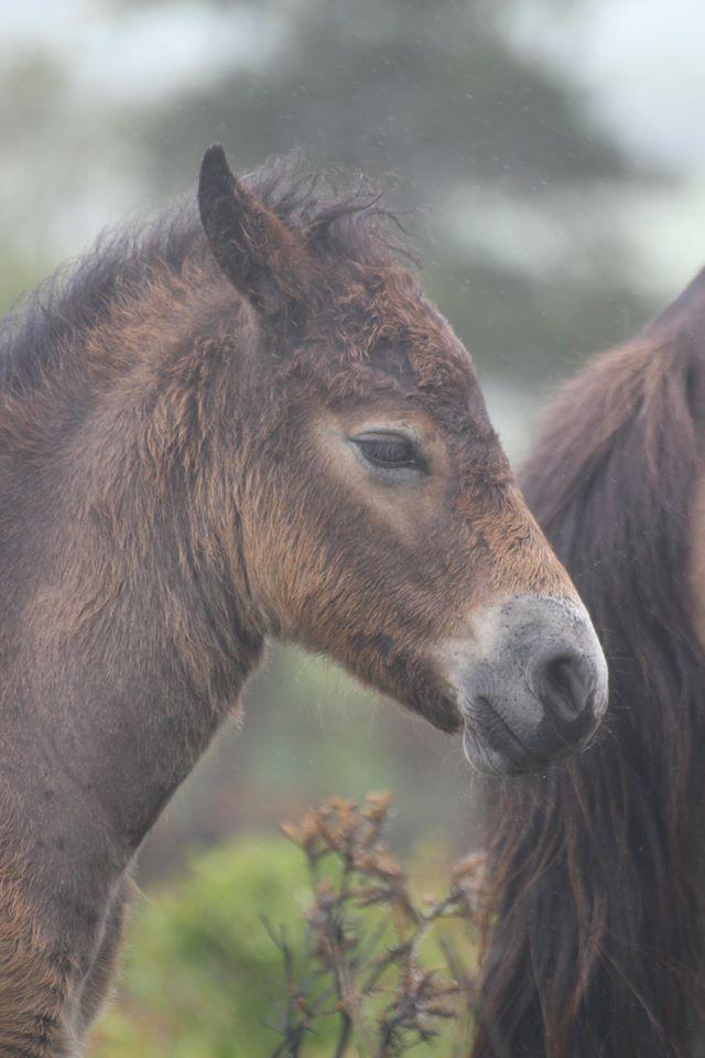 foal2funride