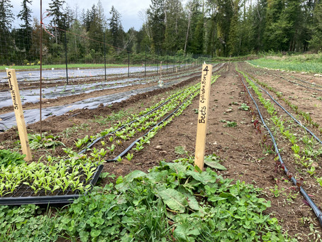 Ready...set...farm!