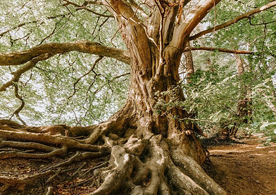 nature-roots-tree-1792626-e1555537998463