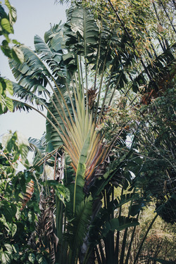 Riverwood gardens