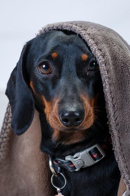 pet photography canberra Dog