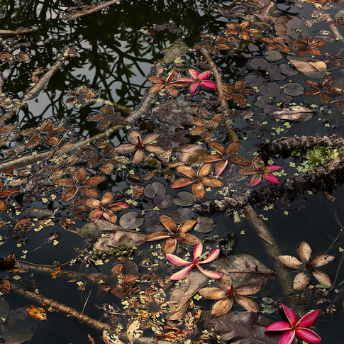 In the pond #01