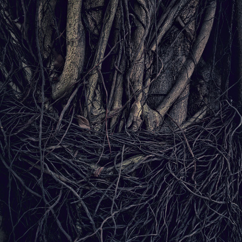 Tree #111516