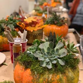 Deconstructing Your Succulent Pumpkin