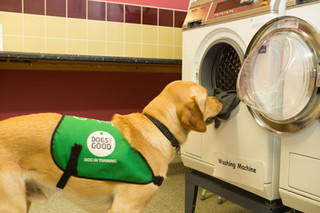 Dogs for Good Assistance Dog Learning to