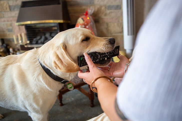 Dogs for Good Assistance Dog Fetching TV
