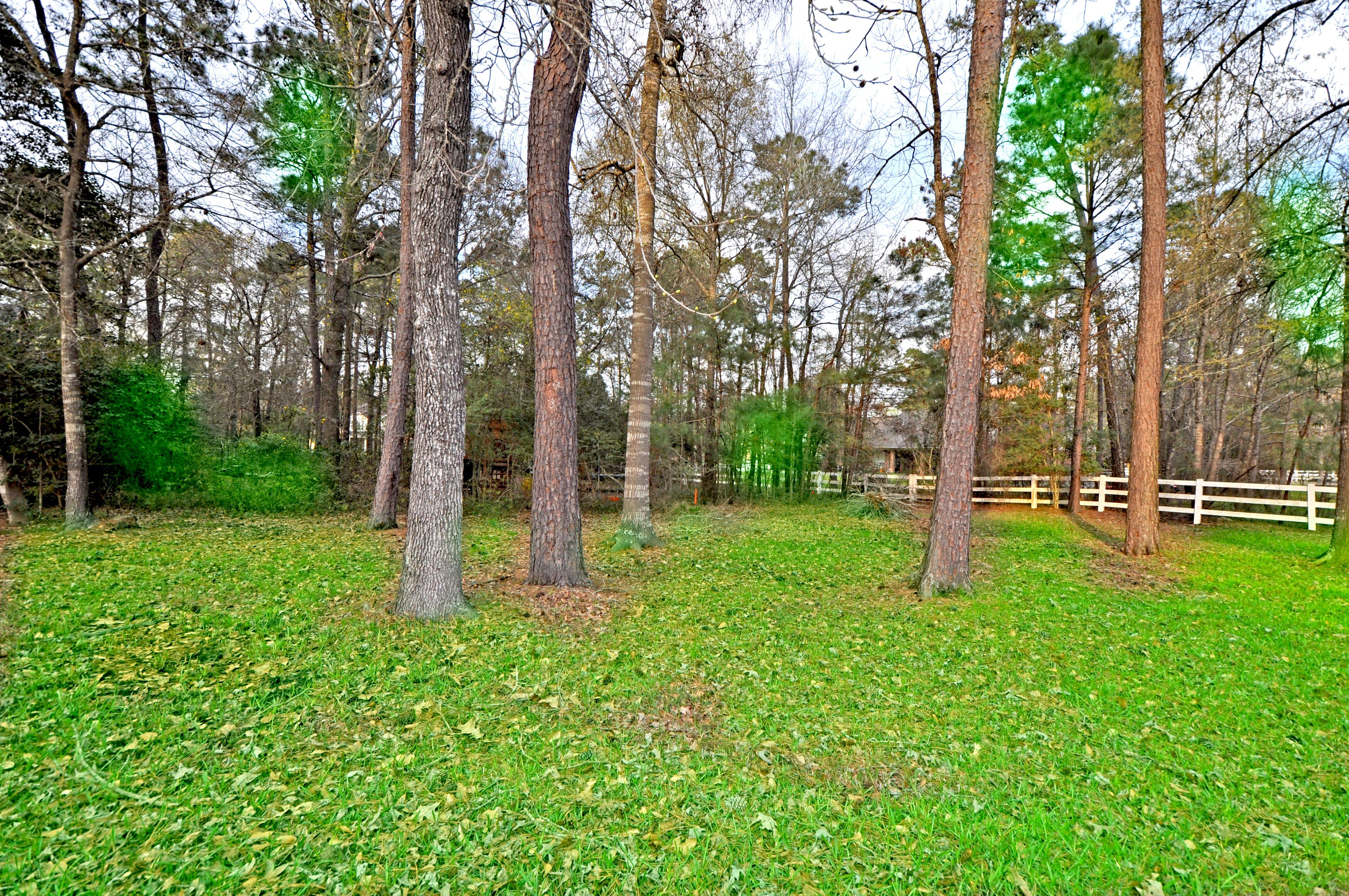 Treed Backyard