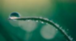 aaron-burden-126996-unsplash_edited.png