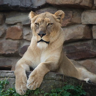 20180331 Ft. Worth Zoo-68.jpg