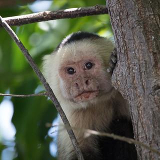 20170410-12 Costa Rica-149.jpg