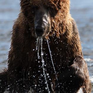 20200713 MLB AS Bears-222-Edit.jpg