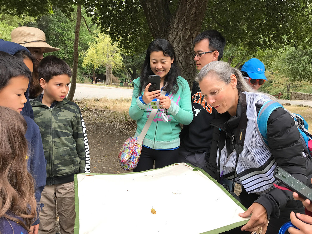 BioBlitz and people