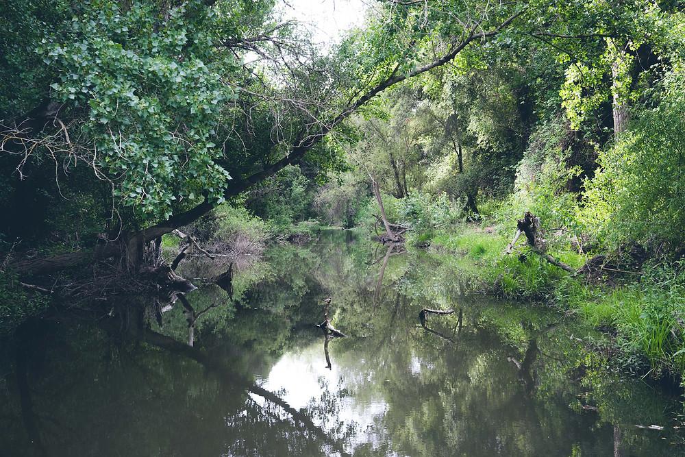 A pristine Coyote Creek.