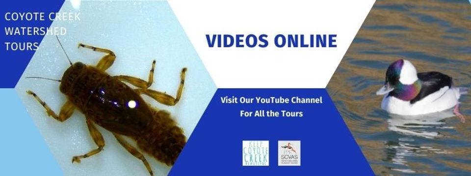 YouTube-CCWT-Web.jpg