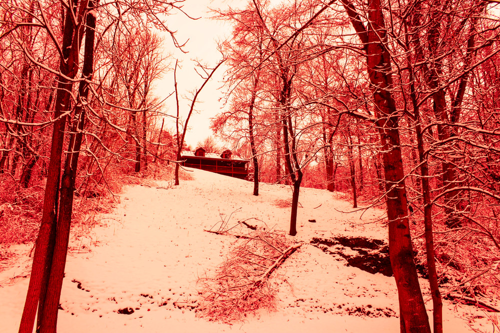 storage in the winter forest_1.jpg