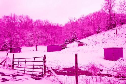 storage in the winter forest.jpg