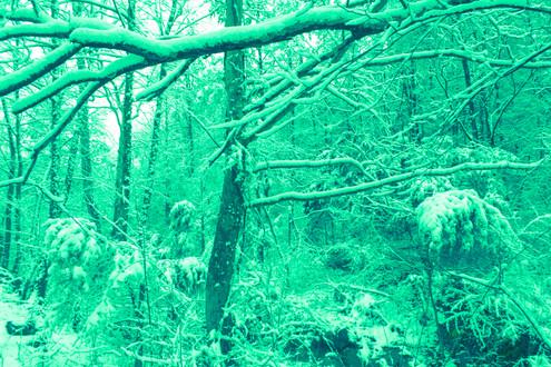 green forest.JPG.jpg