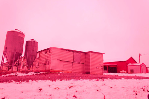 farm in pink_1.JPG.jpg