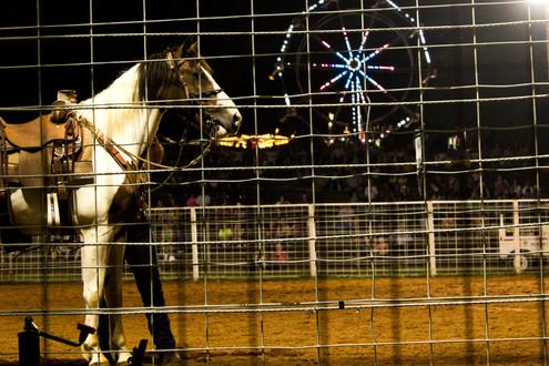 standing horse.jpg