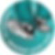 fdyw logo.png