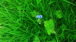 to jest kwiatek z bajki