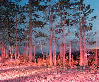 arbres au crépuscule_1000.jpg