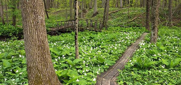 woodland%20boardwalk_edited.jpg