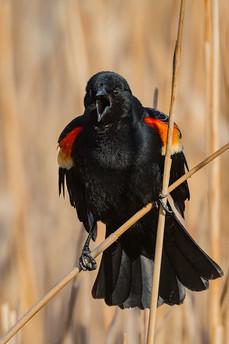 A Bit More About Birds